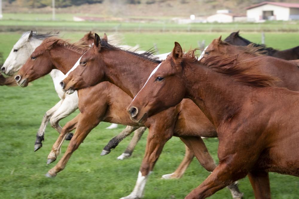 falode-allevamento-equini